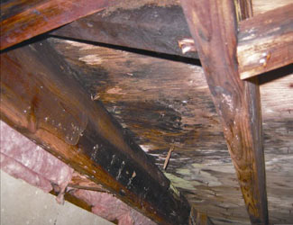mold and rot in a Greece crawl space