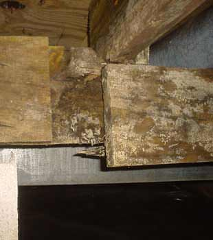 Extensive basement rot found in Pittsford by Halco Basement Systems